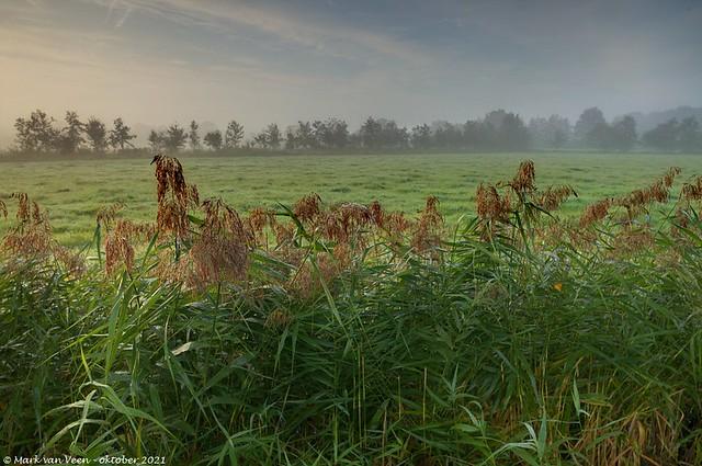 Slagenlandschap; Landscape with old land cultivation patterns