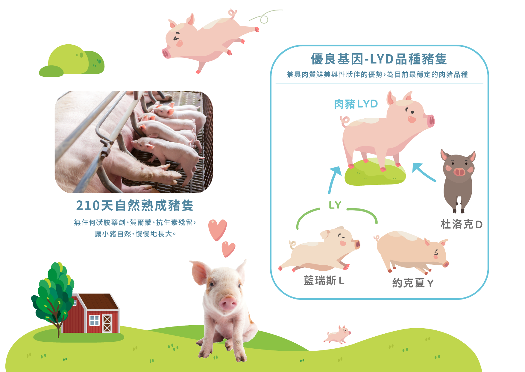 快樂豬懷舊鐵路滷排/3片裝4