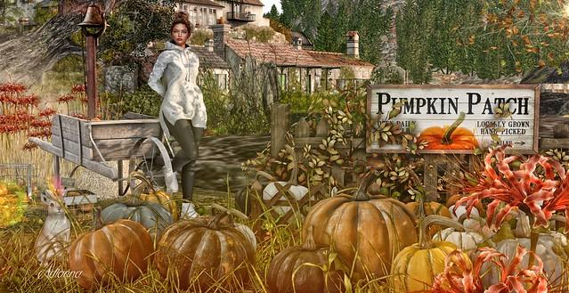 I'm no Cinderella, but I know that pumpkins are magical