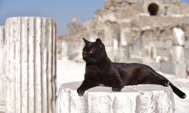 Un chat panthère noir !!