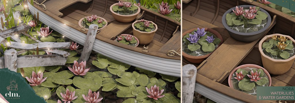 Elm. Nora Water Gardens & Waterlilies Collection