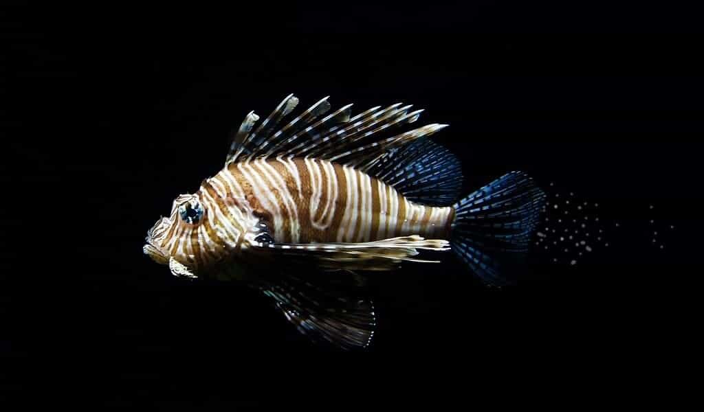 le-manque-de-fèces-de-poissons-modifie-le-flux-de-carbone-dans-océan