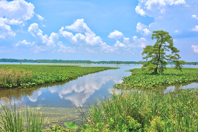 Reelfoot Lake - Tiptonville, Tennessee