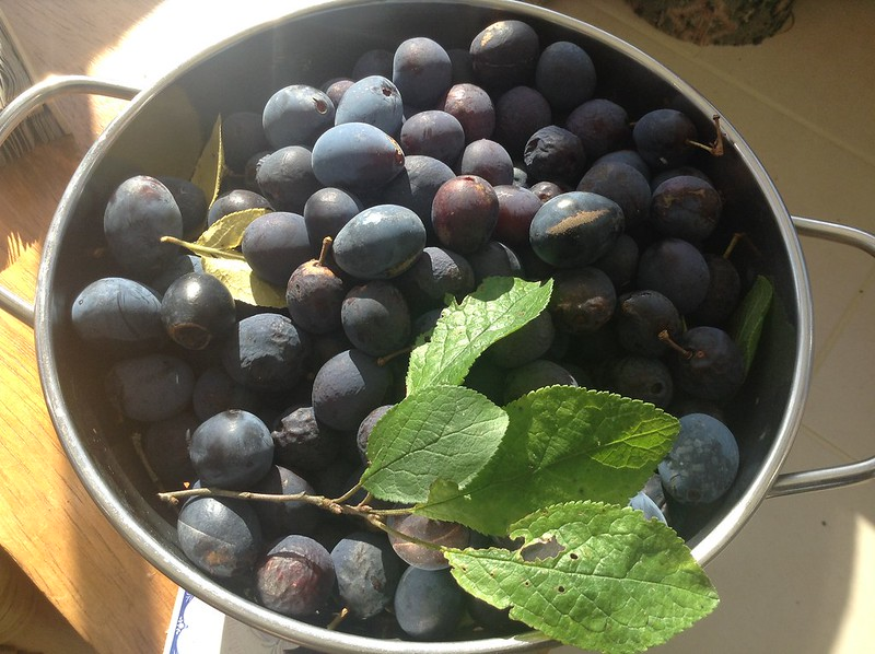 Last of the plums