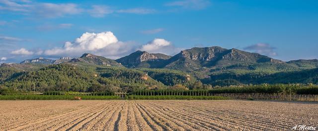 Muntanyes de Tivissa i Vandellos i camps sembrats