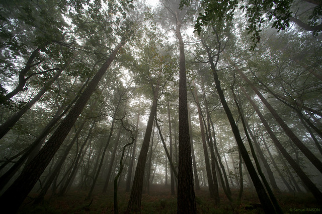 Brouillard dans la forêt  - in Explore