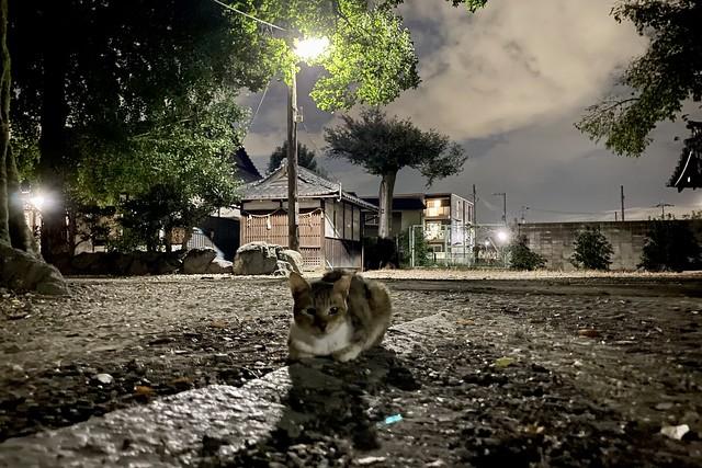 Today's Cat@2021−10−11