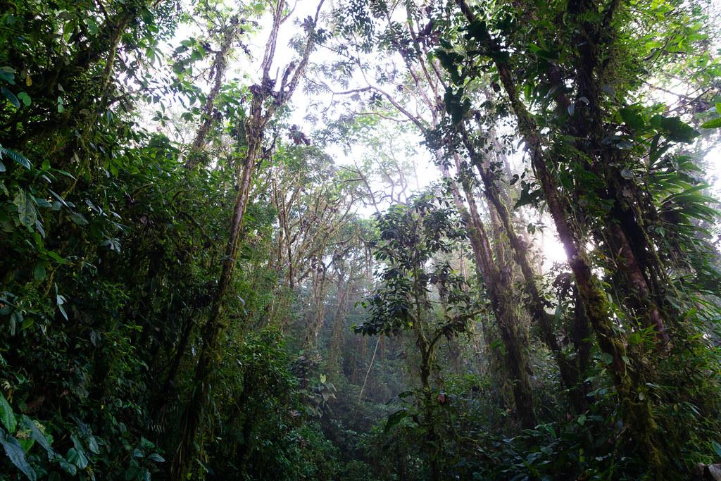 Mashpi: rainforest bosque nublado