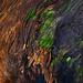 Grain Patterns on a Fallen Log by Theodore Tollefson