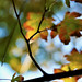 leaf dreams