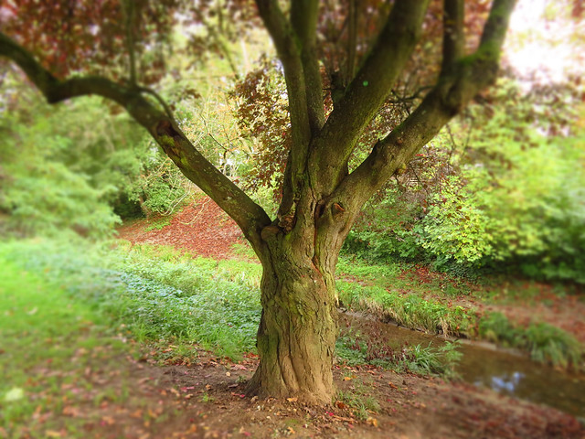 Alter Baum im Park / Old tree in the parc
