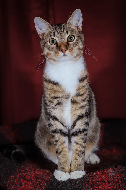 K-Ci the cat