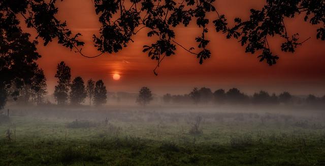 Sunrise on a foggy morning in the Bruges wetlands