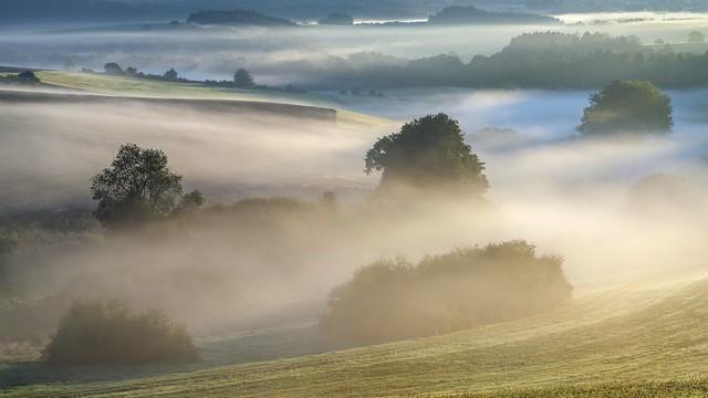 *The magic of fog at sunrise*