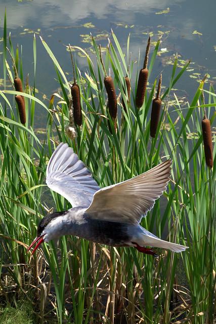 Bird Over Brush