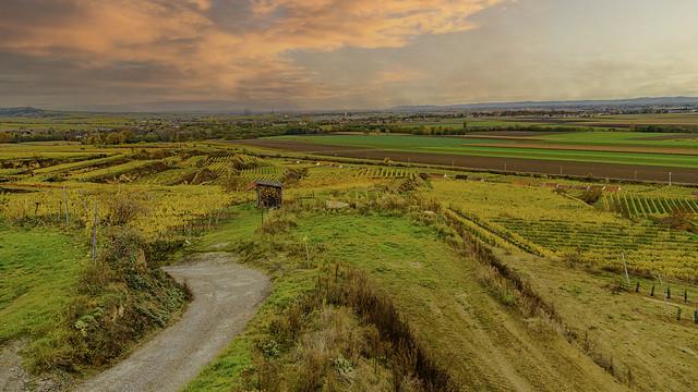 The vineyards of the Kremstal wine-growing region