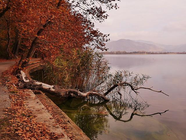 Trees and leaves on Orestiada lake
