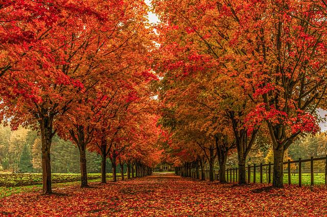 Country Autumn Lane