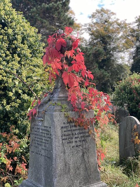 Autumn in Brompton Cemetery