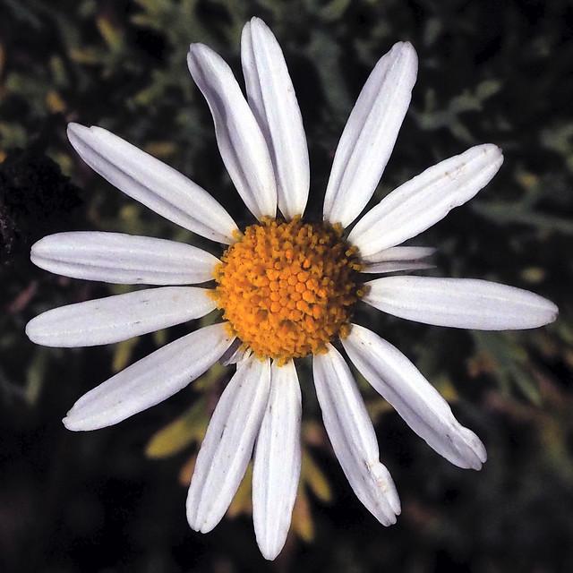 La senzilleza en flor