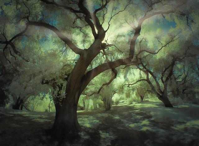 Oak Grove - IR