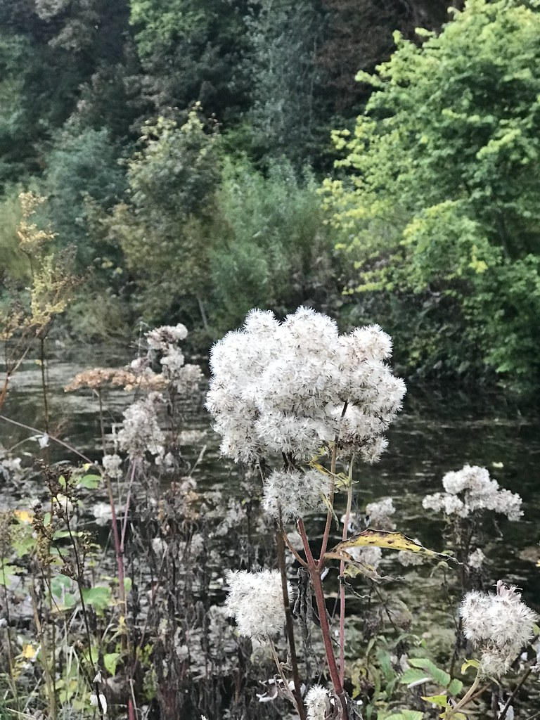 Horsley Mill October 2021