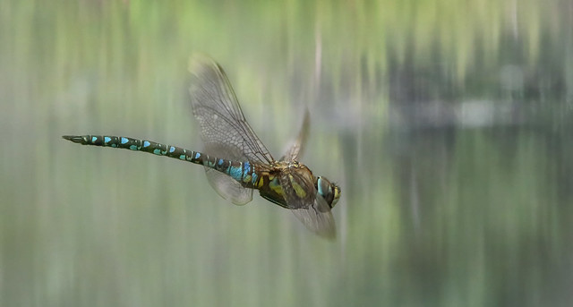 Dragonfly 1S9A9384