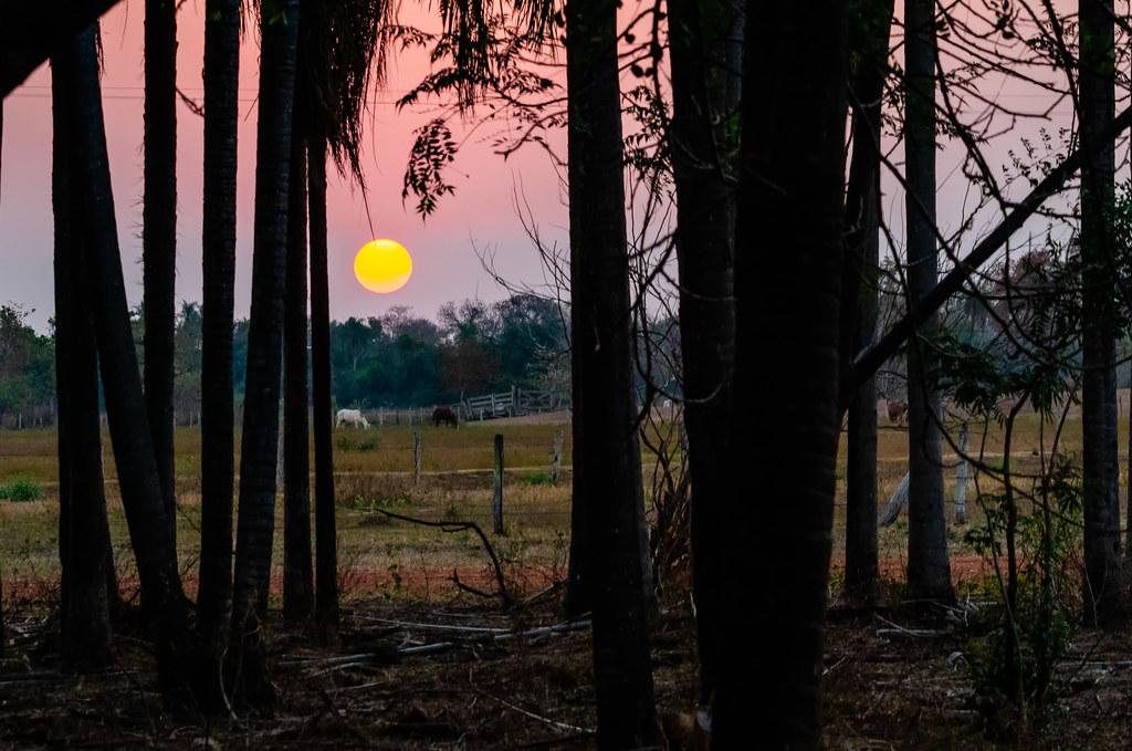 Fim de tarde no Pantanal...
