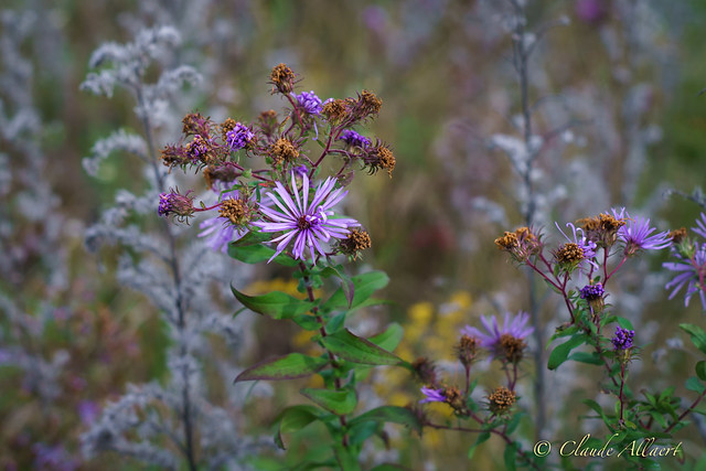 Flower and Weeds