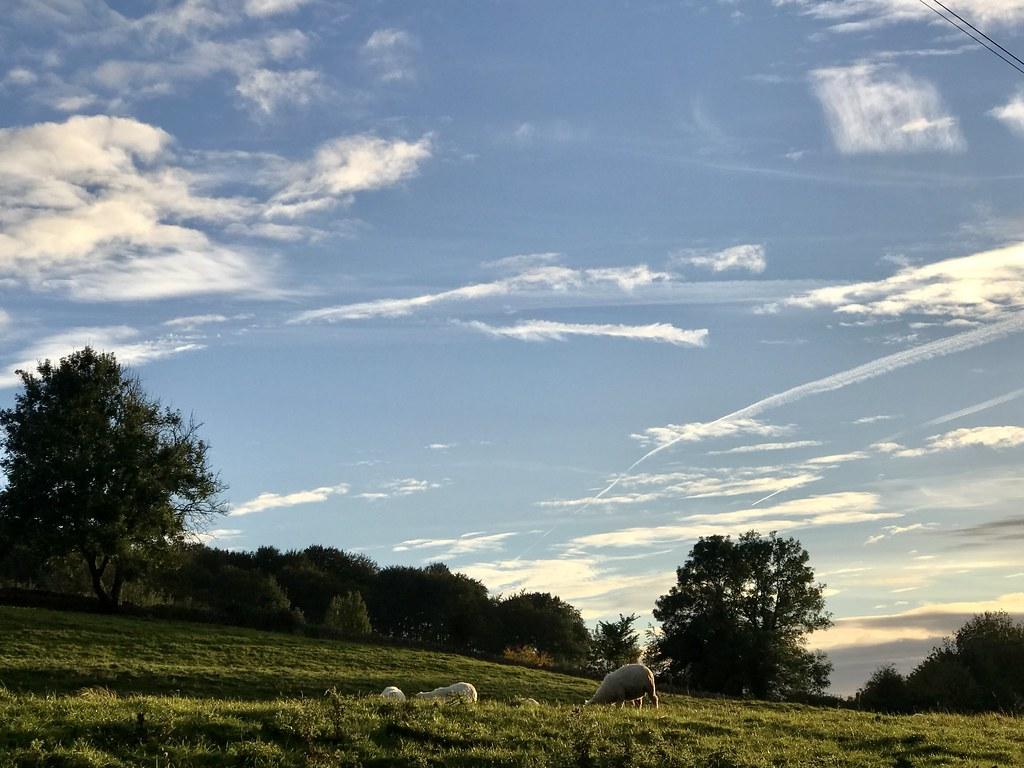 Sheep, Horsley October 2021