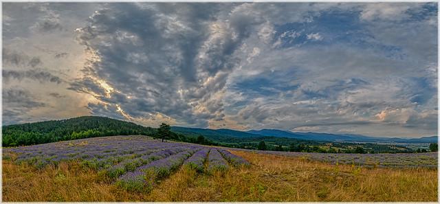 Lavender view of Rila Mountain (in explore on 13.10.2021)