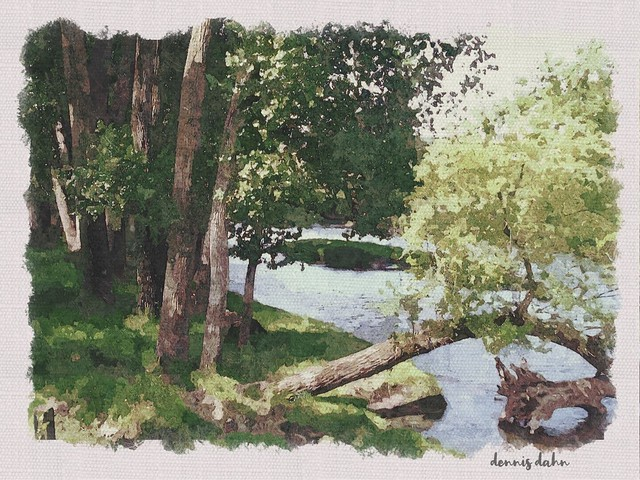 Trees by the stream