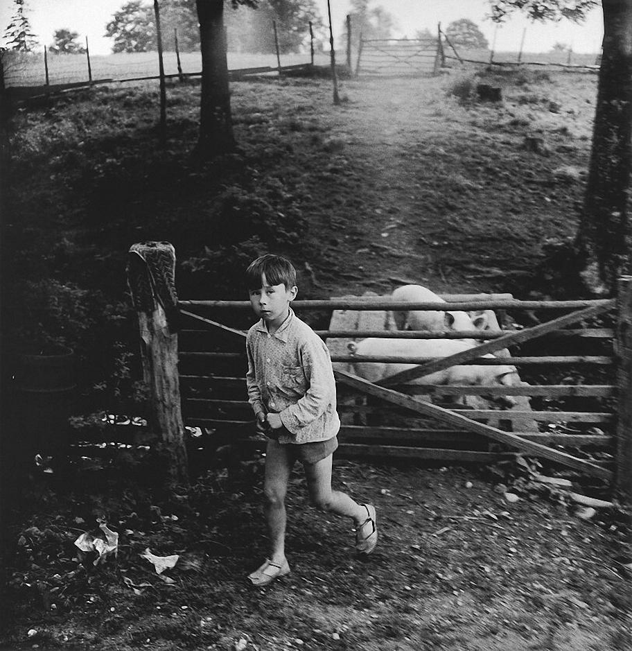 1972. Мальчик со свиньями