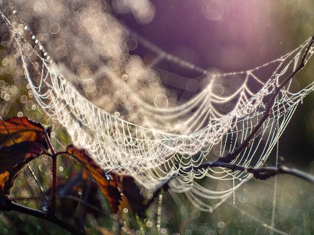 Bubble net