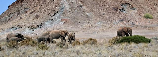 A walk in the Namib desert.