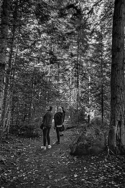 Enchanted Forest - Kaslo, BC