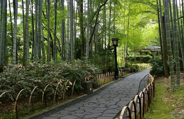 A bamboo forest path