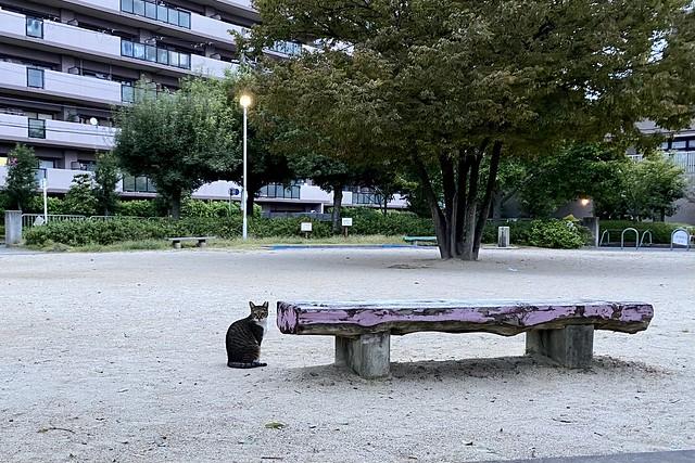 Today's Cat@2021−10−13