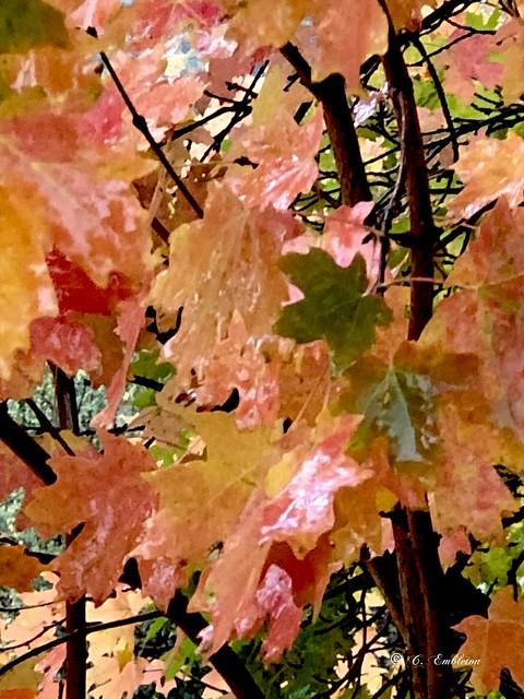 Autumn colors (Explore 10/14/2021)