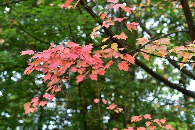 The Sanctuary , Autumn Colours