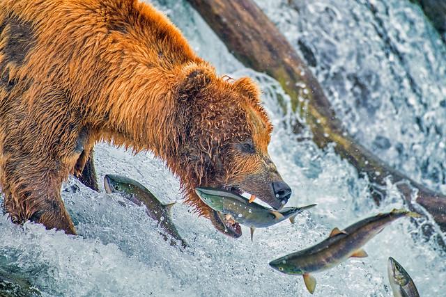 It's a Bear Market