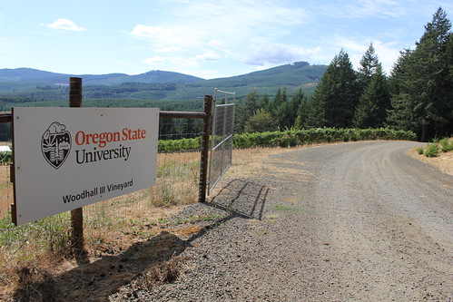 Oregon State's Woodhall Vineyard.