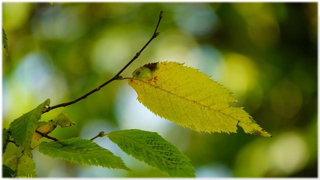 10253 - #Leaves