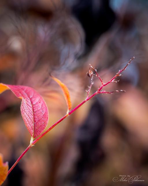 Twig of Autumn