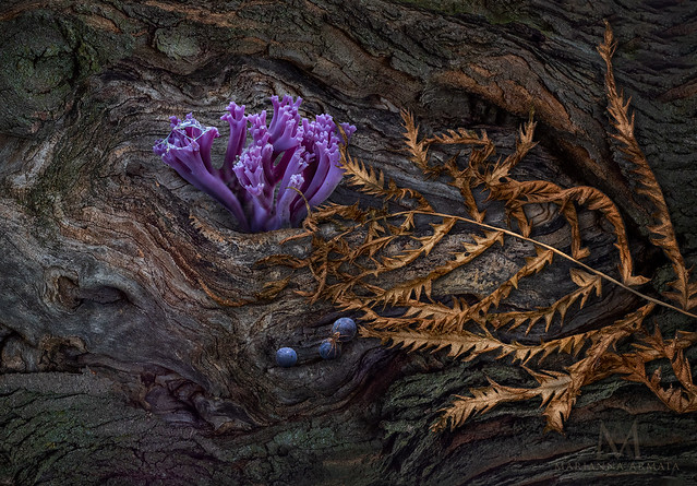 purple coral and friend
