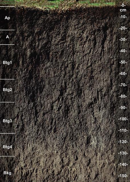 Castlewood soil series