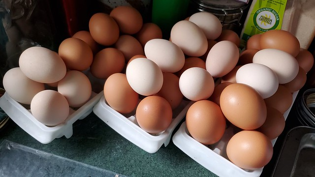 washed_eggs