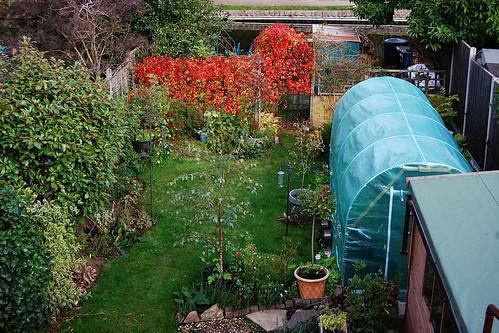 Looking Down on the Garden - October 2021