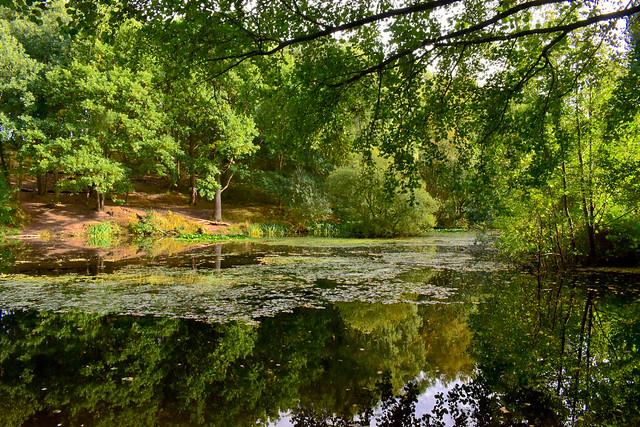 Medieval Pond, Sherwood Forest