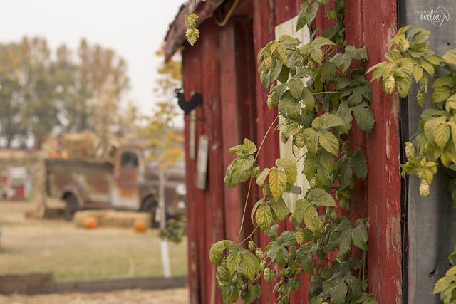 Farm Vibes